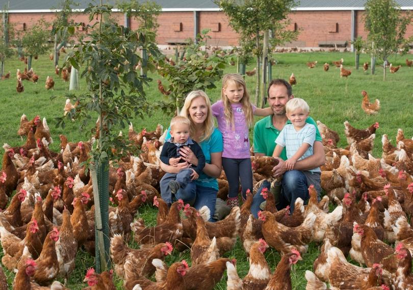Ben's happy hens thrive under trees